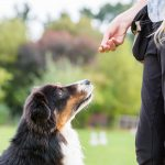 How to Clicker Train Your Dog