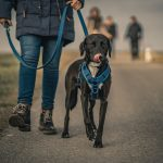 Tips For Choosing The Best Dog Collar & Harness